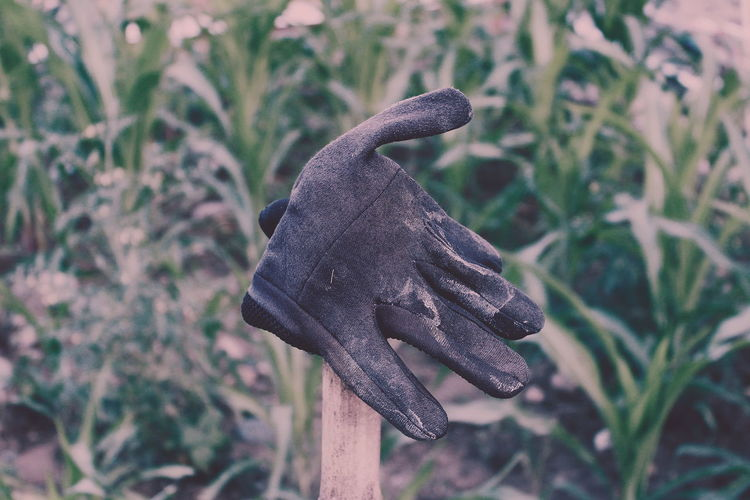 Close-up of glove against plants