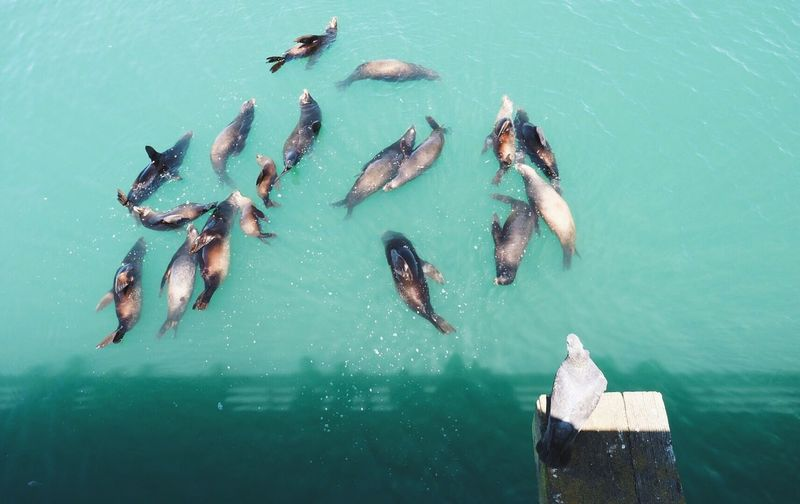 High angle view of bird against seals in sea