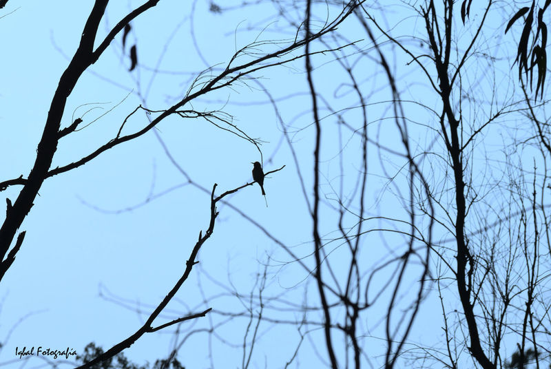 Lonely Bird Bird Low Angle View Branch Bare Tree Sky Perching No People Animal Wildlife Outdoors Tree Animal Themes Animals In The Wild Nature Day Lonliness Lonliest Place Creativity