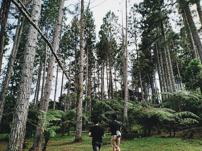 The Week on EyeEm Eyeem Philippines F7 Phone Photography OPPO Tree Forest Branch Tree Trunk Park - Man Made Space Sky Grass