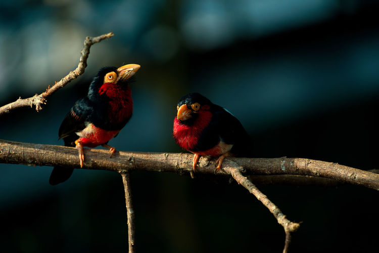 Close-up of birds perching on branch