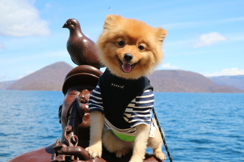 Dog Pets Animal Water Day Mammal Domestic Animals Outdoors No People Sea Protruding Sky Nature Cute Animal Themes ポメラニアン 洞爺湖 Hokkaido Cocoaya Japan 羊蹄山 Beauty In Nature Spring Spring 2017 Pretty