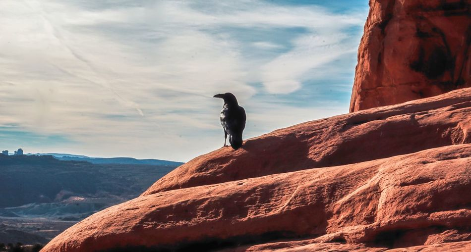 Close-up of crow on rock against sky