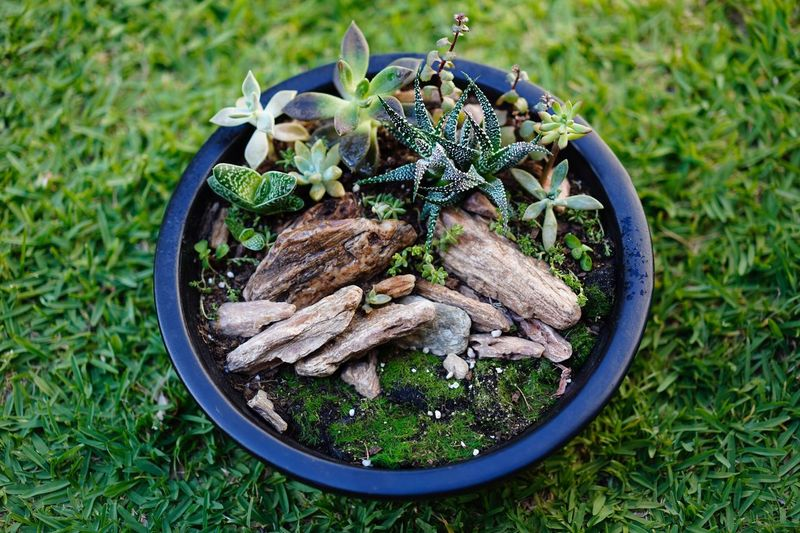 Succulent arrangement bowl Succulentgarden Succulent Planter Rocks Terrarium Moss Wildlife & Nature Potted Plant Plant Arrangement Plant Growth Green Color Nature No People High Angle View Potted Plant Succulent Plant Grass Beauty In Nature Vegetable Outdoors Mushroom Field