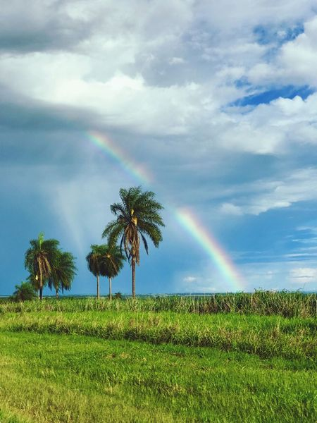 Rainbow Double Rainbow Nature Scenics Beauty In Nature Cloud - Sky Tranquil Scene Tranquility No People Tree Landscape