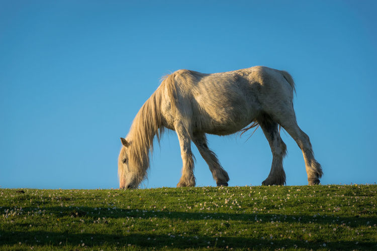 White Mare At