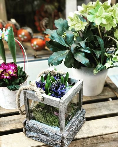 Flower Freshness No People Potted Plant Table