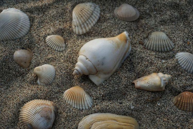 High angle view of seashells on beach