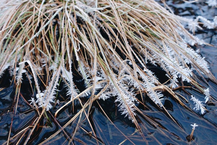 Nature Icy Ice Crystal Ice Crystals On Grass Winter Wintertime Beauty In Nature