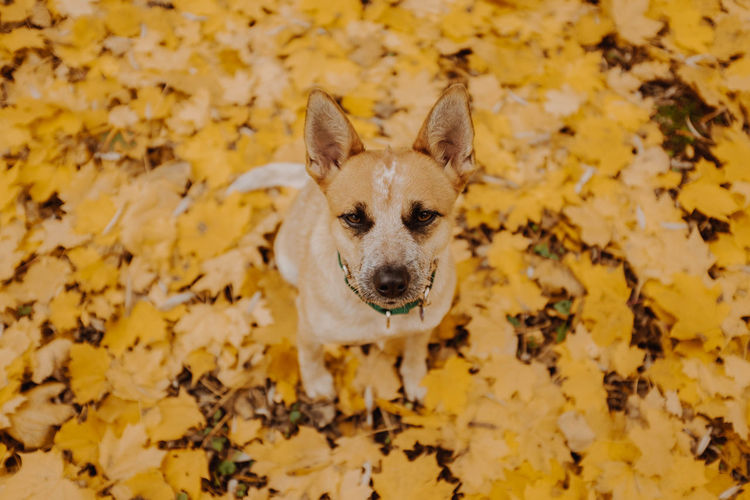 Portrait of dog sitting on leaves during autumn