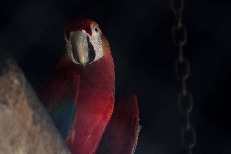 Animal Behavior Animal Head  Animal Themes Animals In The Wild Avian Beak Bird Close-up Focus On Foreground Looking Nature No People One Animal Orange Color Red Selective Focus Vibrant Color Water Bird Wildlife Zoology