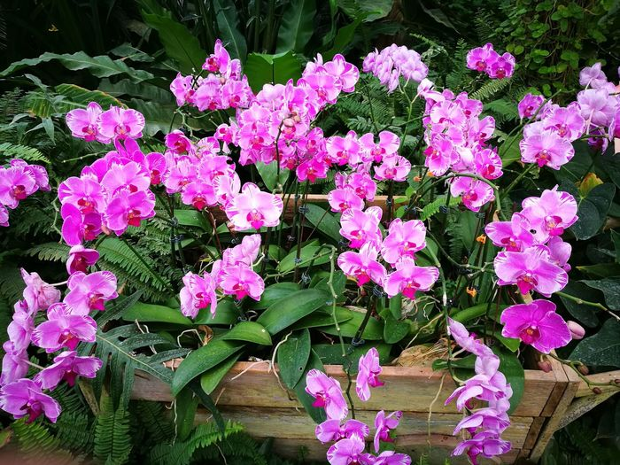Flower Nature Outdoors Beauty In Nature Pink Color Growth Day Plant No People Leaf Fragility Freshness Flower Head Close-up Petunia