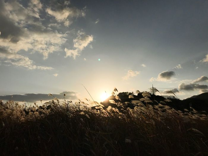 #sunset #reed Sky Beauty In Nature Cloud - Sky Plant Scenics - Nature Nature