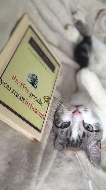 Books Five Peope You Meet In Heaven Cat Eyes