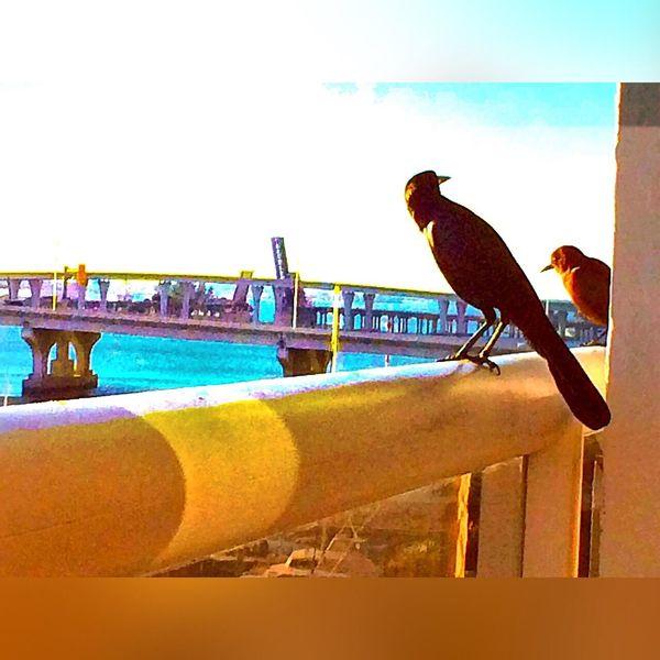 Miami Heaven 🇺🇸☀️FL Miami FL Usa 🇺🇸☀️ Check This Out Miami Now Nature Portrait Of America America Miami