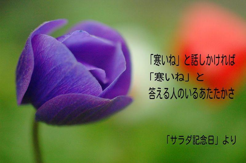 好きな短歌。 Flowers