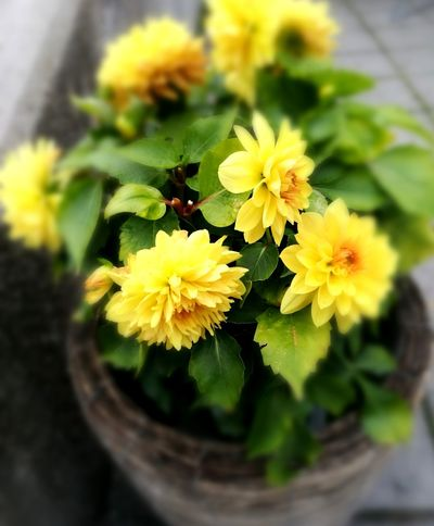 Flower Yellow Flower Head Plant Freshness Nature Petal Insect Growth Fragility Day No People Beauty In Nature Outdoors Close-up Animal Themes Leaf Bee Animals In The Wild EyeEm Selects Investing In Quality Of Life Paint The Town Yellow Postcode Postcards