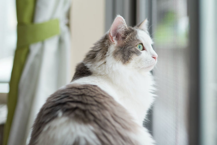 Close-up of a cat sitting beside window