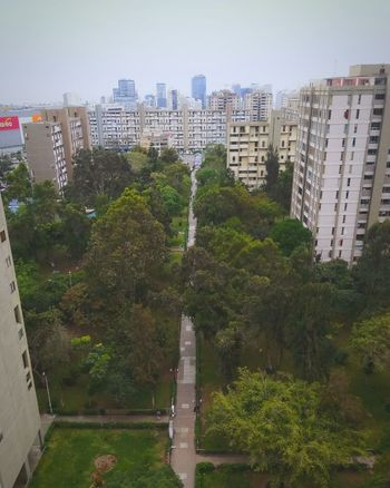 Tree City Architecture Skyscraper Cityscape Outdoors No People Built Structure Building Exterior Day Urban Skyline Sky Water
