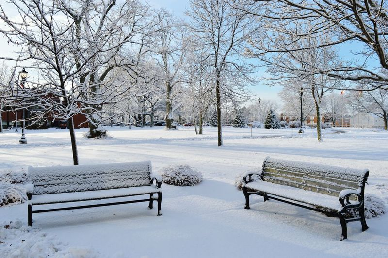Snow Covered Benches In Park