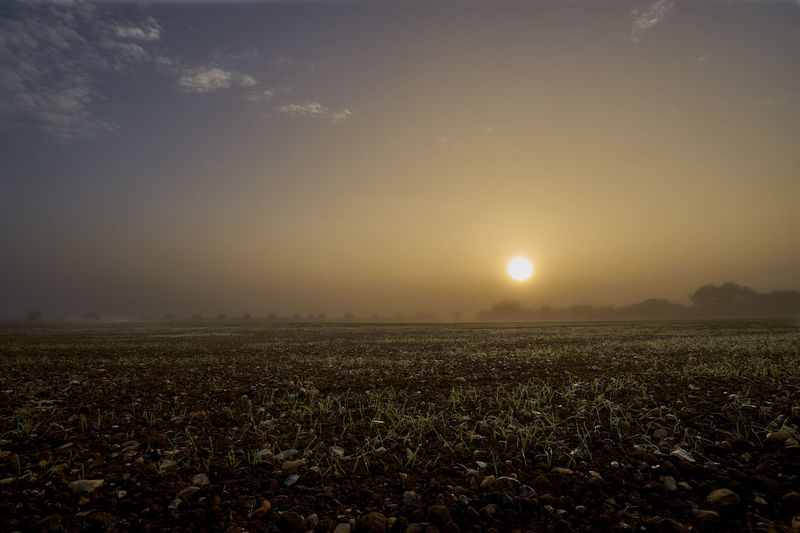 Sunrise Through Fog Bare Earth Blue Sky Clouds & Sky Crops Crops In The Sun Farmers Field Fog Foggy Foggy Morning Green Color Haze Landscape Landscape_photography New Growth No People Orange Color Orb Stones Sunrise Fog Sunrise Over Farmland Water Droplets