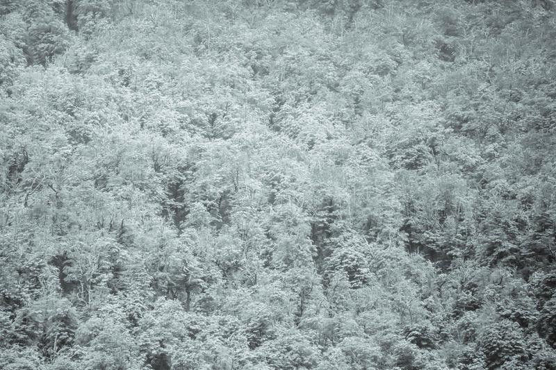 Full frame shot of snow on plants