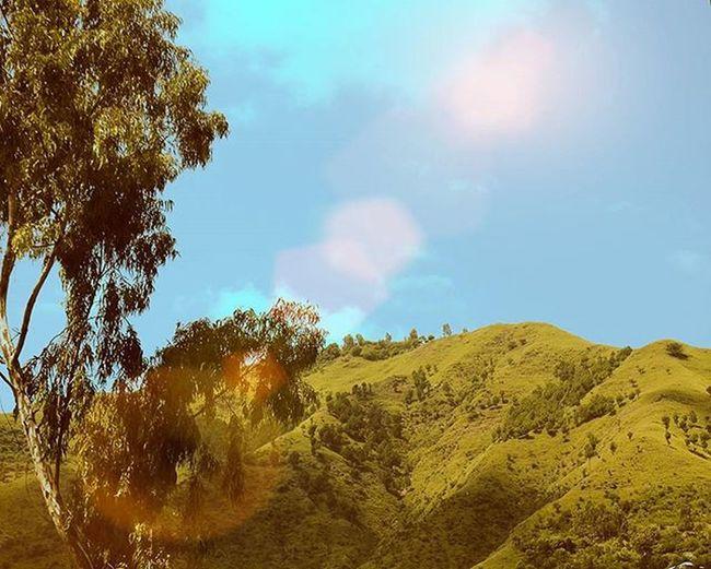 I love places that make you realize how small you and your problems are....✌✌ BeautyOfPakistan Pakistan Paki Nature Naturelover Beauty Travelers Tourism Beautyfulpakistan Sunrays Mountain Travelpakiatan Ig_pakistan Trees Jungle Grass Im_pakistan Instameetpakistan Discovringpakistan Wheninpakistan WonderfulPakistan Vascopakistan Shutterpak Picturepakistan Vascopakistan northen abbotabadcity abbotabad instanatureamazingartofearth