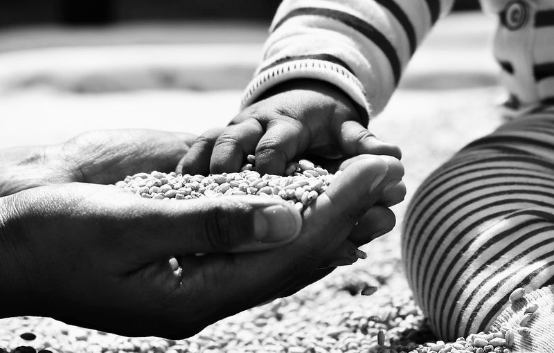 Midsection Of Baby Touching Grains In Hand