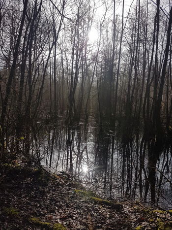 See im Wald Tree Nature Forest Beauty In Nature Outdoors Tranquility No People
