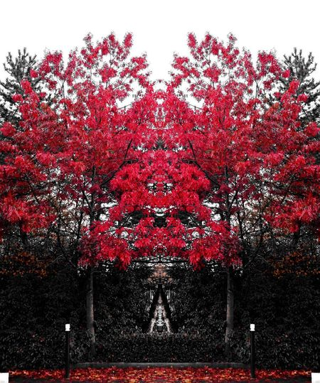 Rouge Fantaisie Tree Red Growth Nature Beauty In Nature No People Outdoors Branch Sky Day Freshness