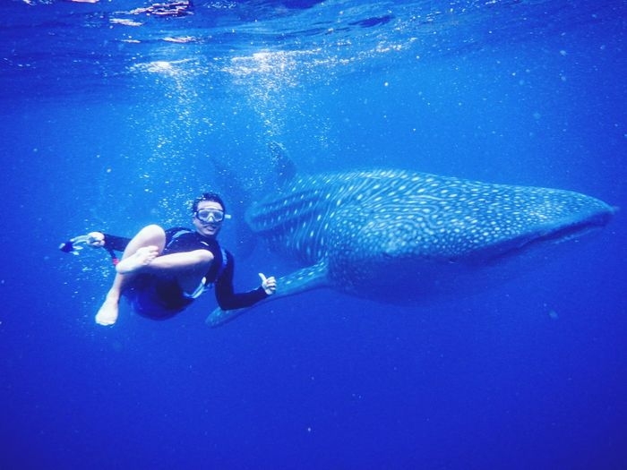 Man Swimming With Whale Shark In Sea