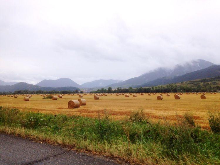 Reeds Landscape