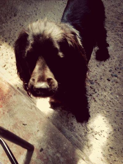bonito perrito :3