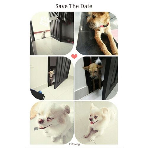 when i Comebackhome they get up me Cute Lovely Dog love white pink