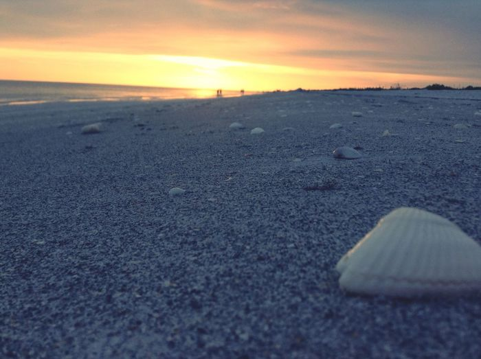 She sells sea shells by the sea shore Sunset Beach Clouds And Sky Nature