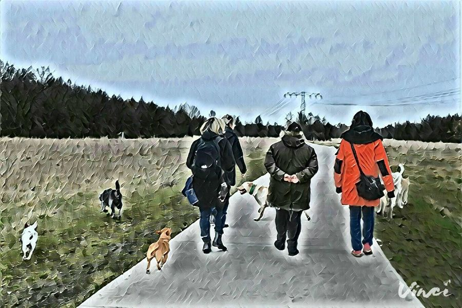Vinci App Rear View Domestic Animals Outdoors Dogwalk Dogslife Cearnaigh Irish Wolfhound Lifestyles Ways Through The World Real People Cold Temperature Togetherness Herrenkrugpark The Places I've Been Today Winter 2017 How Is The Weather Today? March 2017 Dog Of The Day Dogs Of Winter Dogs Of EyeEm Animal Themes
