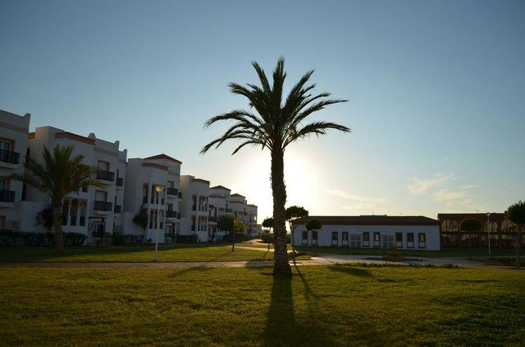 Beauty Saidia Morocco Palm