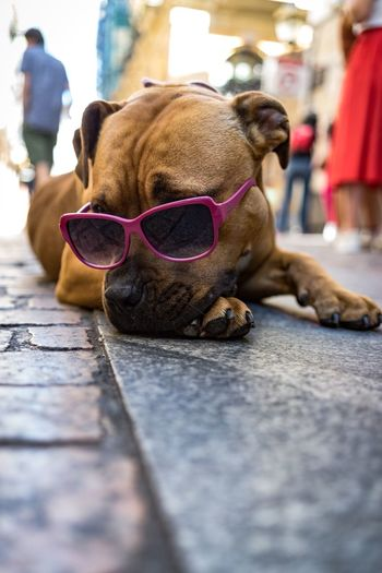 Close-up of dog relaxing on street