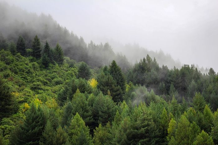 Forest in South Island, New Zealand Tree Fog Nature Beauty In Nature Growth Landscape Tranquility No People Mist Tranquil Scene Green Color Outdoors Forest Mountain