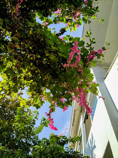 Low angle view of flowering tree by building