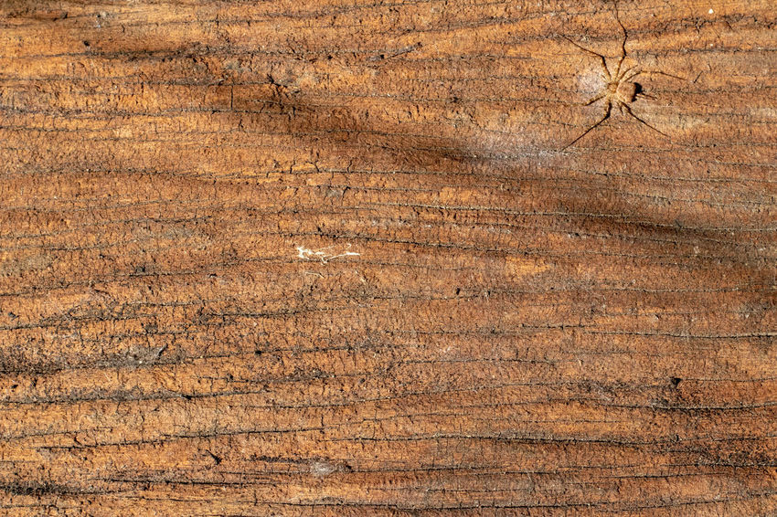 Antique Backgrounds Brown Brown Background Close-up Full Frame Natural Pattern Nature No People Old Pattern Plank Plant Rough Textured  Tree Weathered Wood Wood - Material Wood Grain