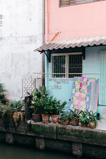 Bangkok Pastel Power Pink Thailand Travel Travel Photography Traveling Blue Building Exterior Built Structure House No People Outdoors Pastel Plant Travel Destinations Window