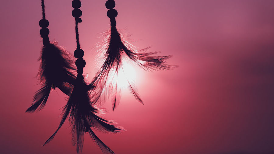 Dream catcher native american in the wind and blurred bright light background, hope and dream concept The Minimalist - 2019 EyeEm Awards The Great Outdoors - 2019 EyeEm Awards Good Luck Charm Good Luck Hopes And Dreams Abstract Dreamcatcher Flower Scenics - Nature Fragility Pink Color Focus On Foreground Vulnerability  Dusk Low Angle View Outdoors Growth Purple Close-up Tranquility Plant Silhouette Nature Beauty In Nature No People Sky Sunset Decoration