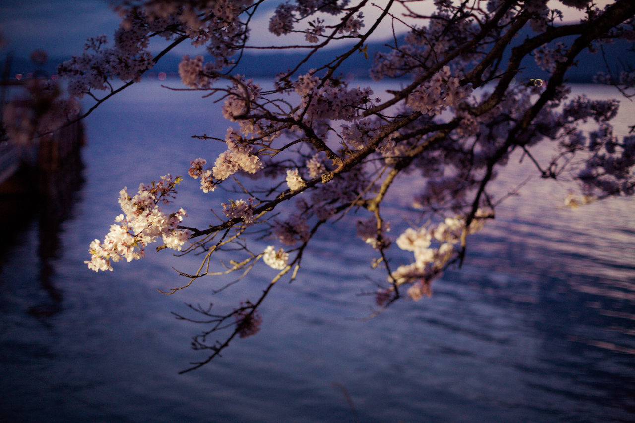 VIEW OF CHERRY BLOSSOM TREE AGAINST LAKE