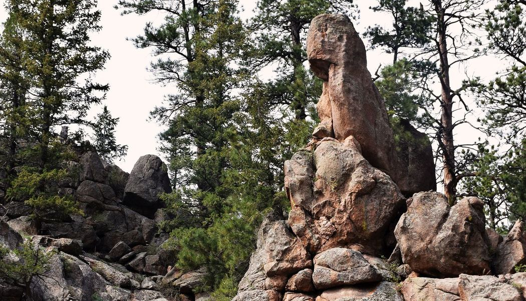 Age Colorado Views Contemplation Elk Mountains Eroded Rocks Estespark Forest Natural Beauty Natural Rock Formation Pine Trees And Rocks Rock Formation Scenics Weathered Rocks Worndown