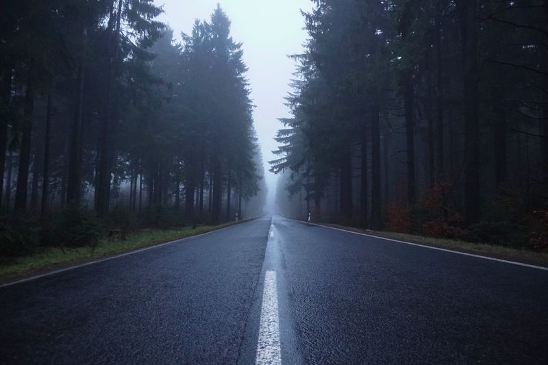 Road Marking Foggy Road Fir Tree Winter Wet Road Plant The Way Forward Direction Tree Transportation Nature No People Tranquility Land Diminishing Perspective Scenics - Nature Forest Tranquil Scene Empty Road Beauty In Nature Fog vanishing point Environment Outdoors