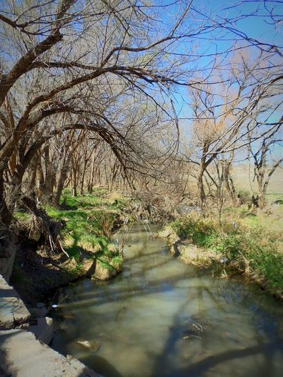 There is a world full of undiscovered mysteries. Hanging Out Taking Photos Check This Out Hello World Enjoying Life Taking Photos Enjoying Life Photography Simplicity Beautiful View Futurephotographer Simple Photography Westtexas Beginnerphotographer Treescollection Walking Alone Small Stream