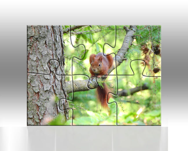 Animal Animal Themes Mammal No People Plant Tree One Animal Animal Wildlife Nature Day Outdoors Vertebrate Close-up Tree Trunk Trunk Transparent Digital Composite Rodent Squirrels Squirrel Puzzle