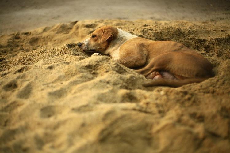 Dog sleeping on sand