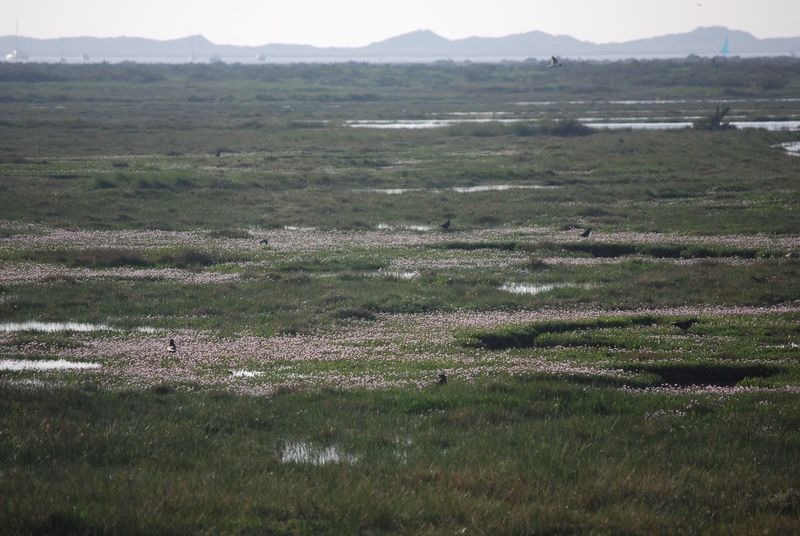 Sea people now on the salt marsh Landscape Field Nature Tranquil Scene Day Grass Tranquility Scenics Beauty In Nature Outdoors No People Mountain